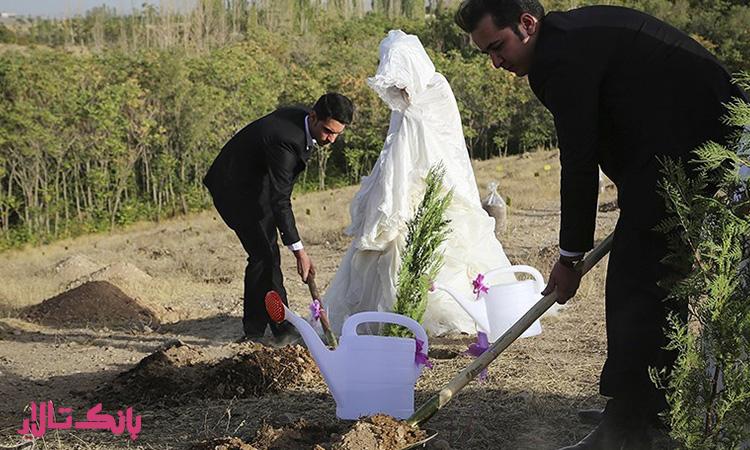 تشریفات مراسم کاشت درخت ایده ای جذاب برای جشن عروسی